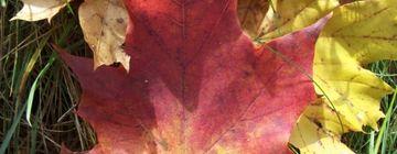 Herbstliche Schorfheide